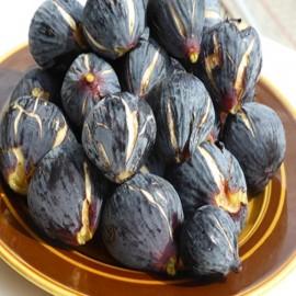 Siyah Orak (Karadeniz Patlıcan İnciri) İncir Fidanı
